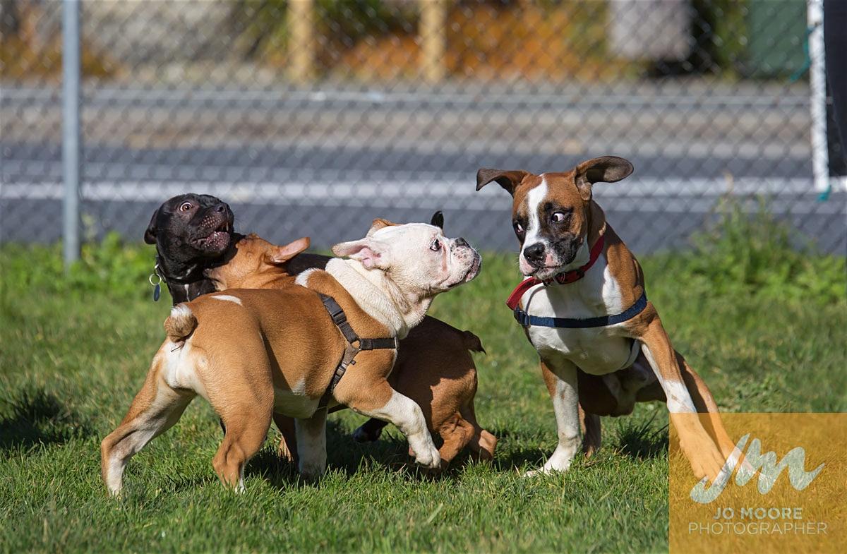 Bulldogs-35.jpg