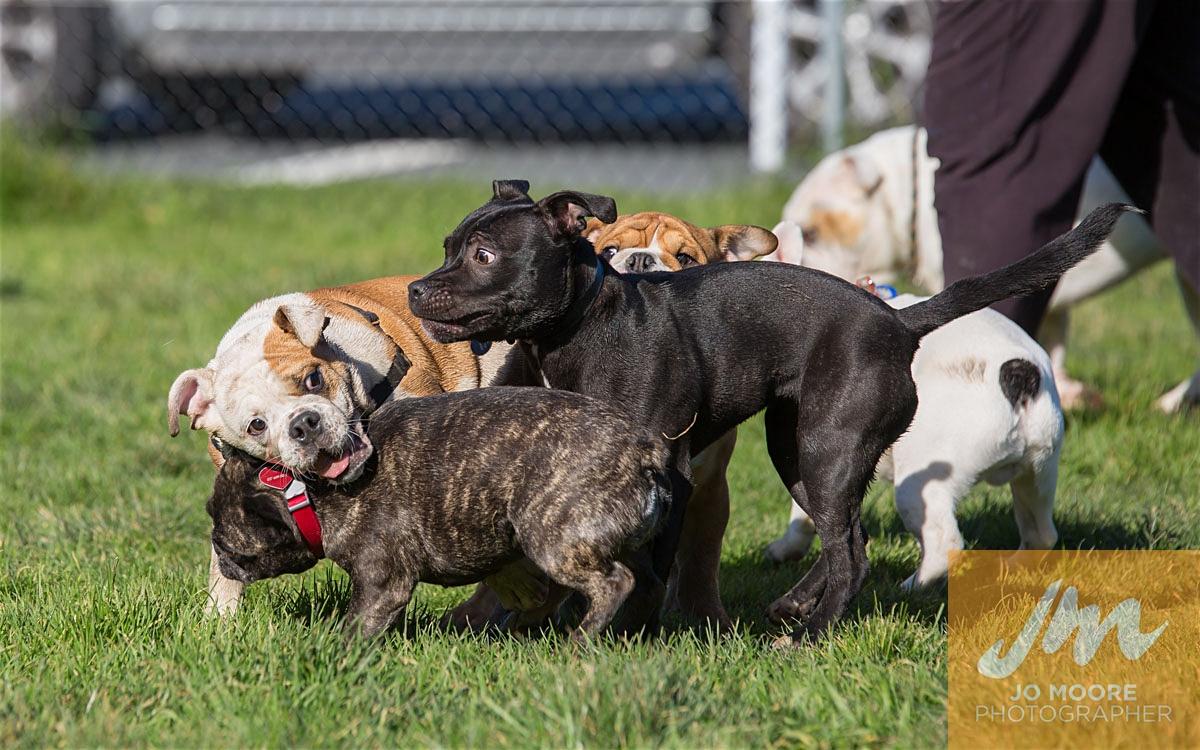 Bulldogs-44.jpg