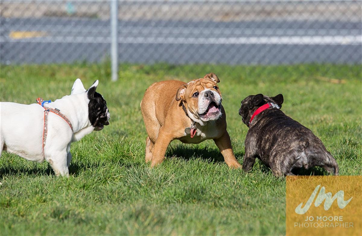 Bulldogs-46.jpg