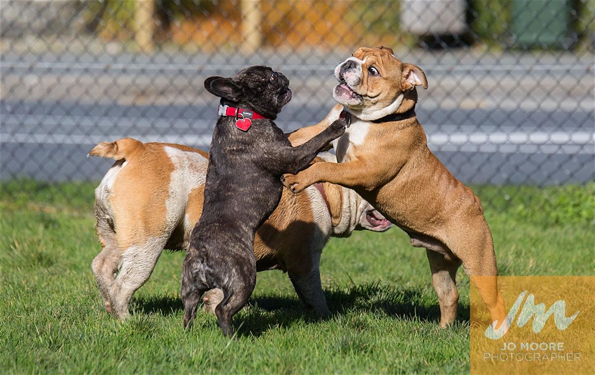 Bulldogs-45.jpg