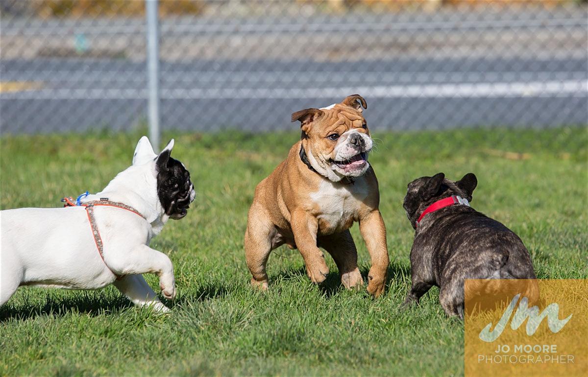 Bulldogs-47.jpg
