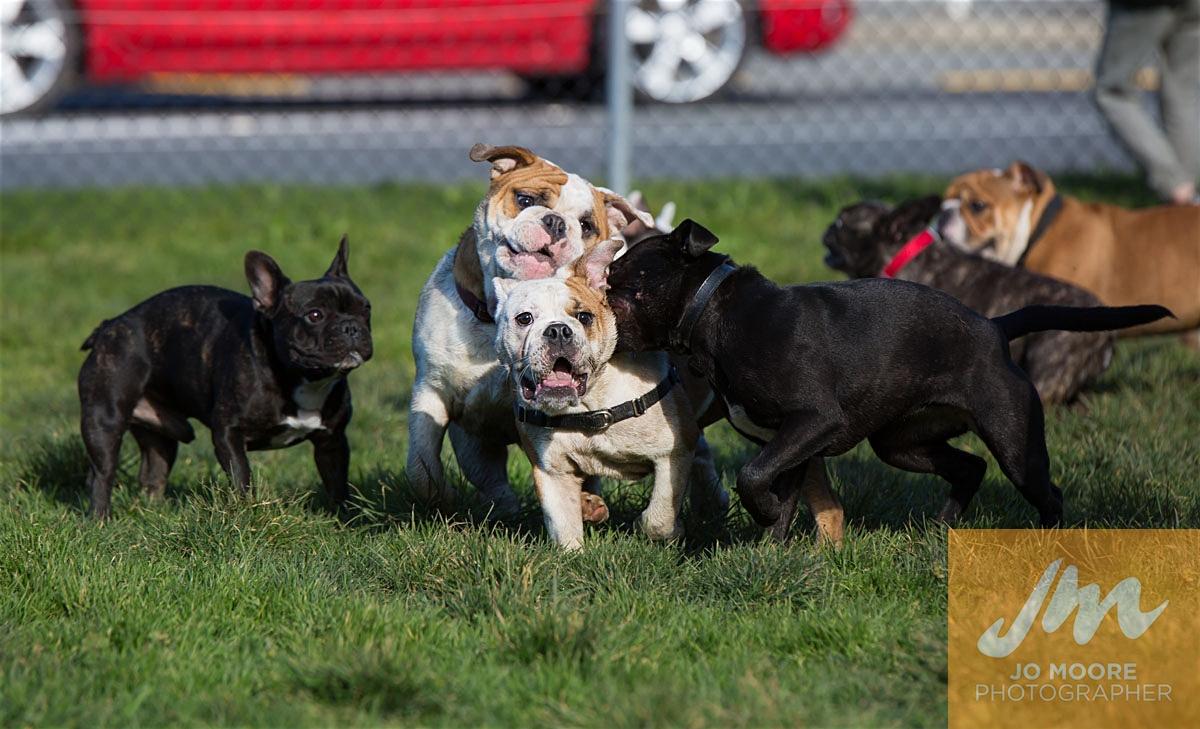 Bulldogs-49.jpg