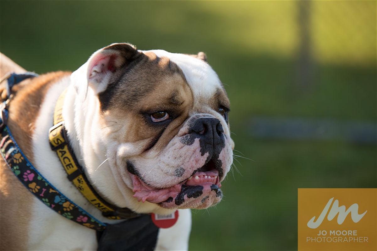 Bulldogs-57.jpg