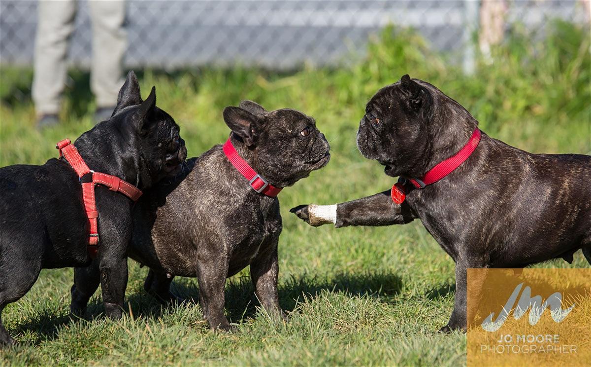 Bulldogs-70.jpg