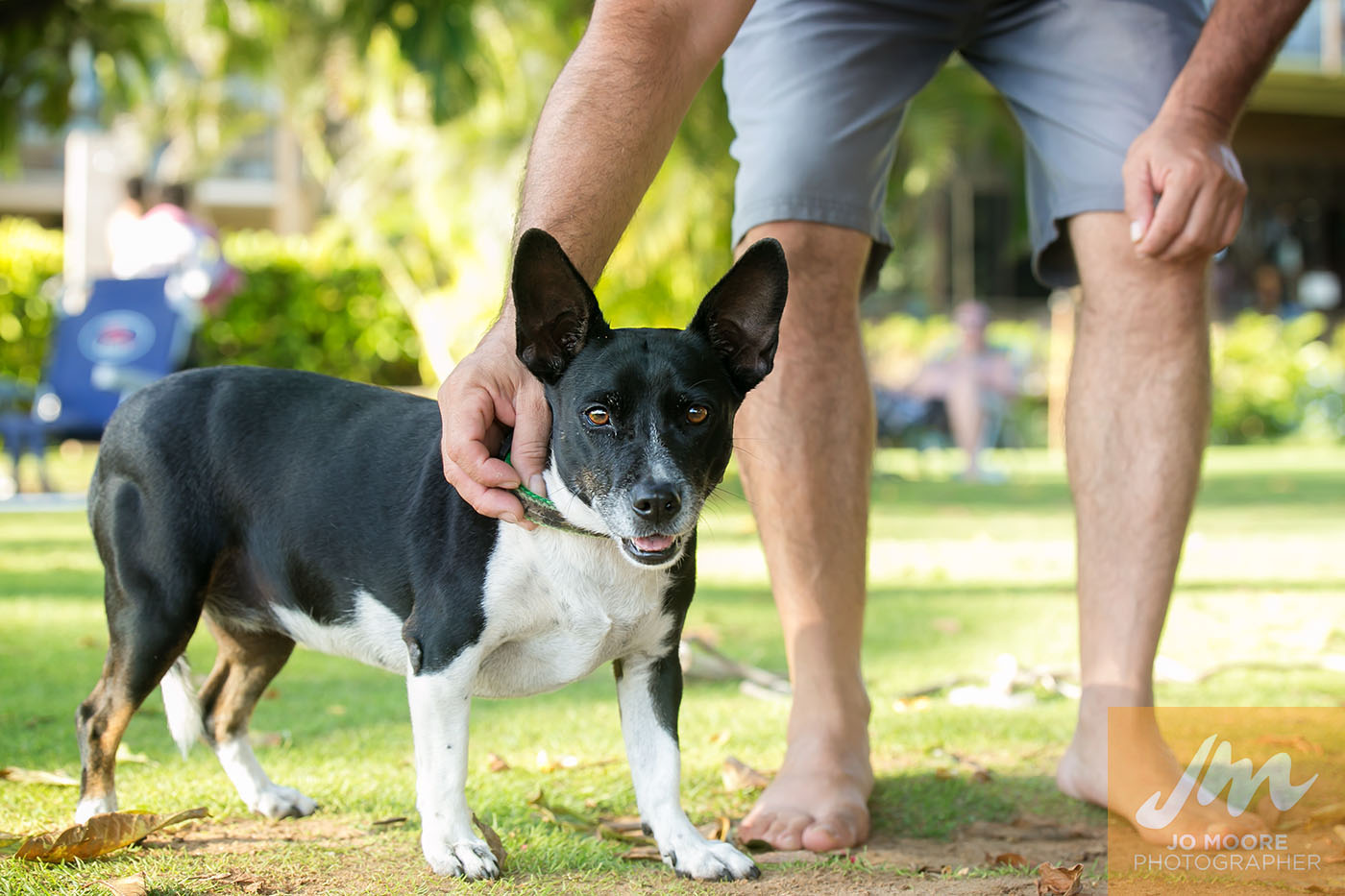 Maui Dogs-2.jpg