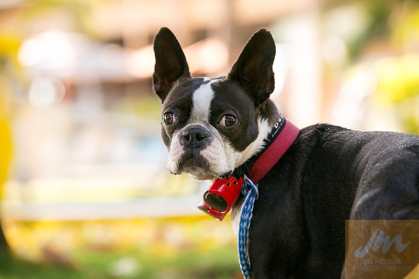 Maui Dogs-1.jpg