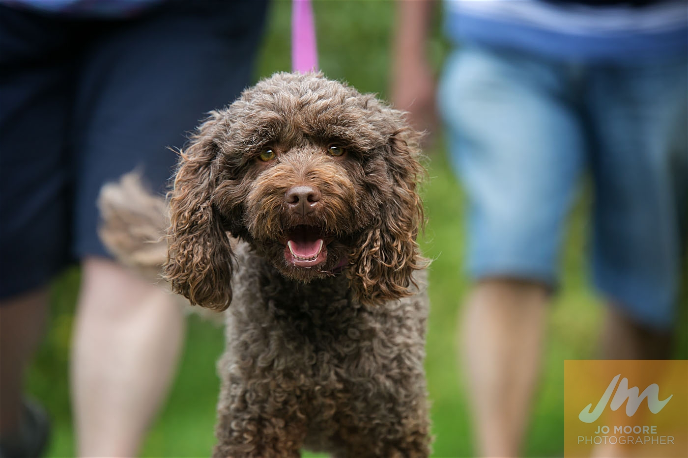 Paws in the Park-71.jpg