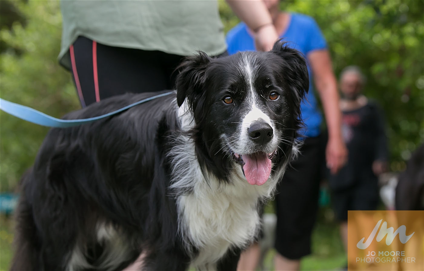 Paws in the Park-75.jpg