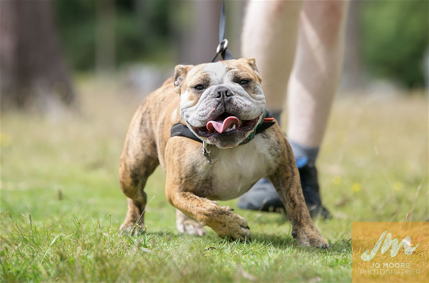 Paws in the Park-85.jpg