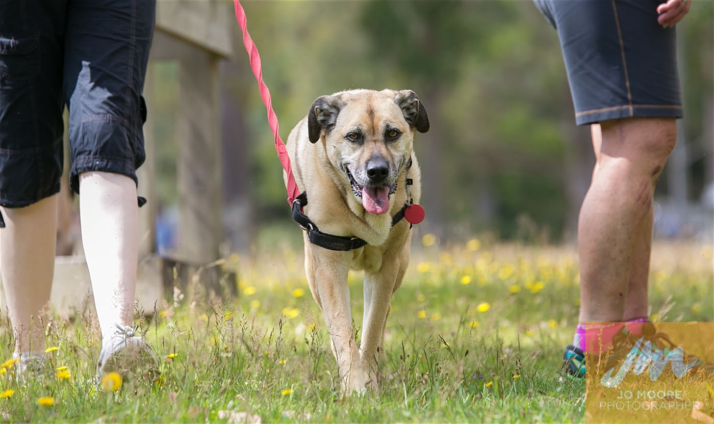 Paws in the Park-90.jpg