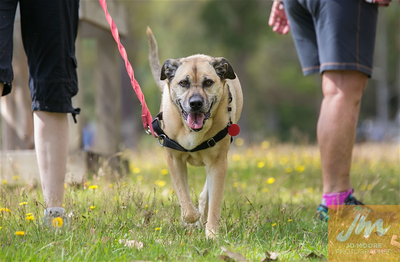 Paws in the Park-91.jpg
