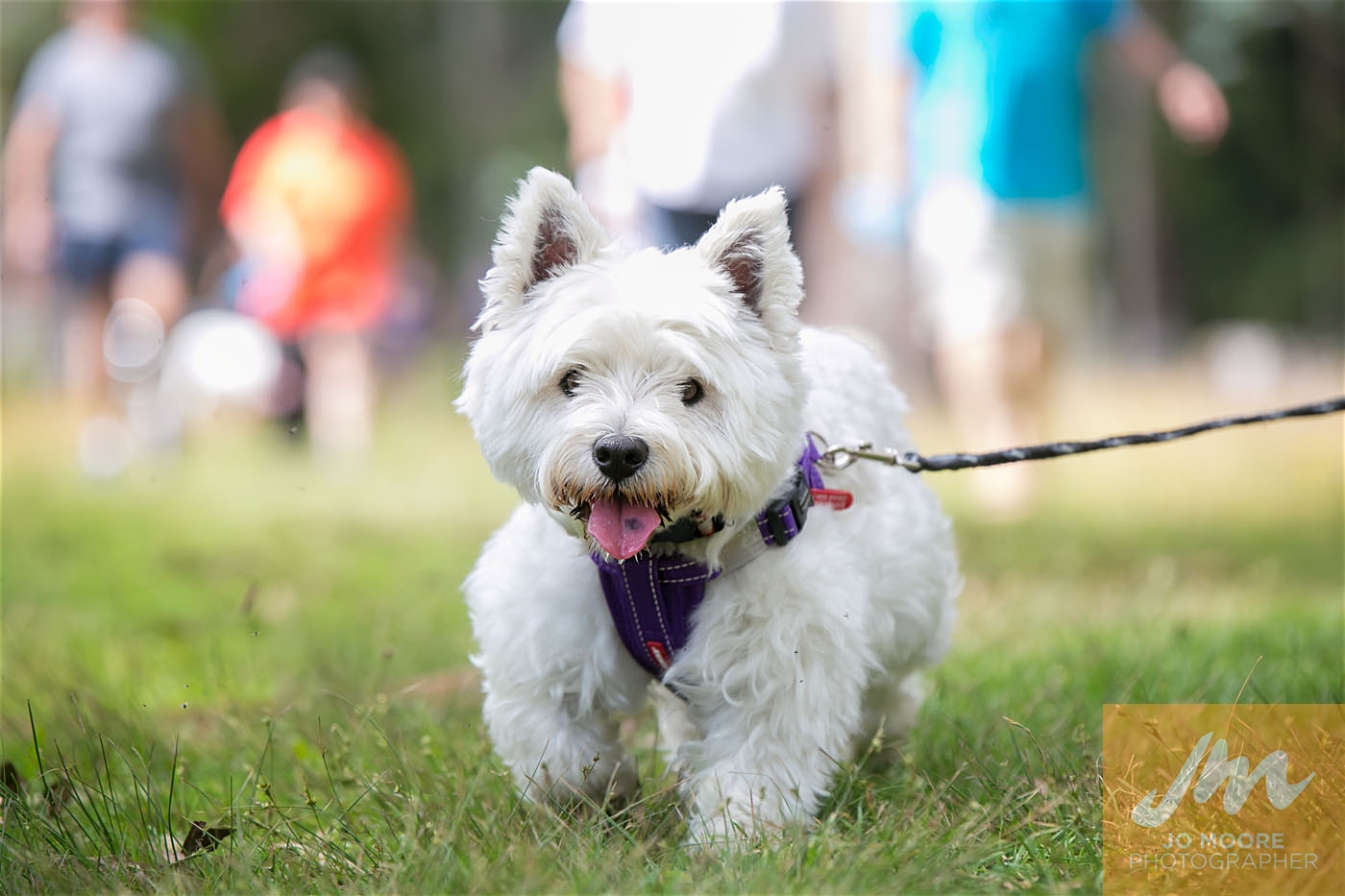 Paws in the Park-94.jpg