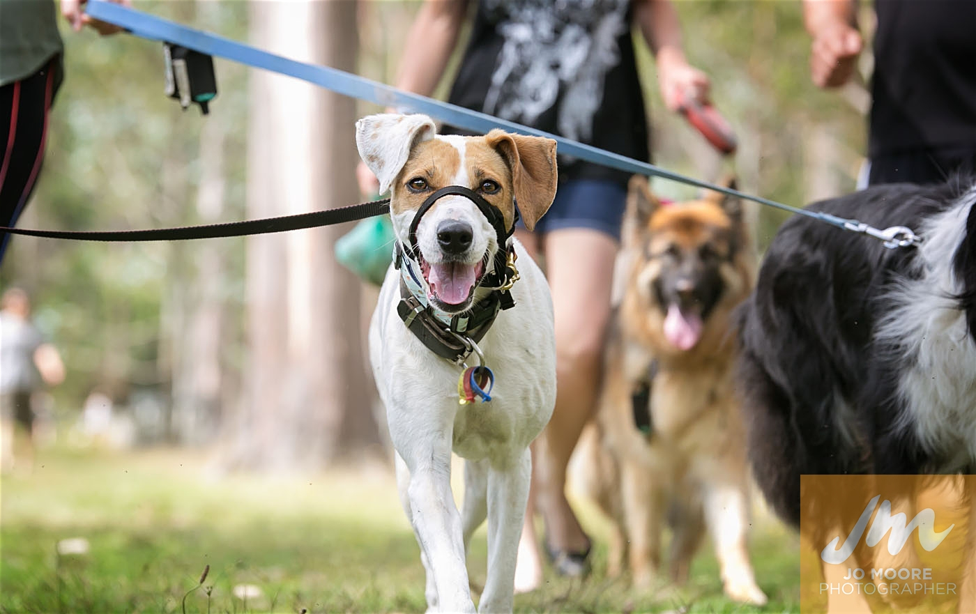 Paws in the Park-104.jpg