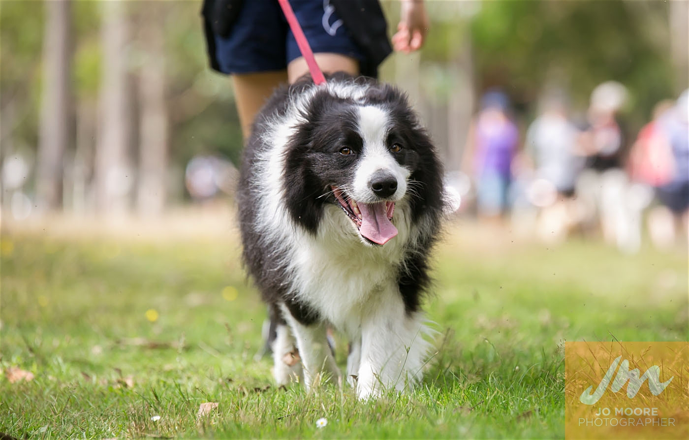 Paws in the Park-110.jpg