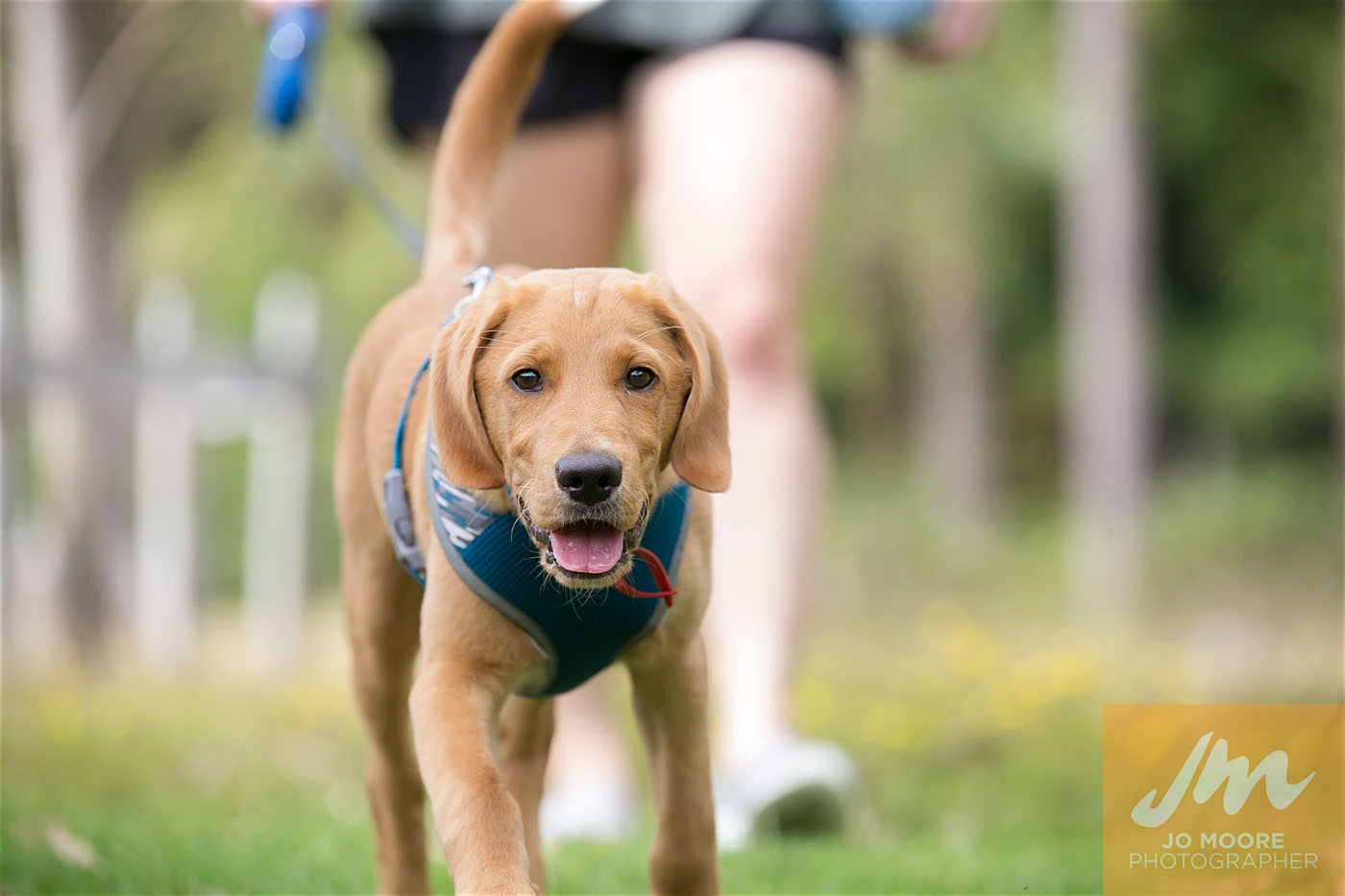Paws in the Park-118.jpg