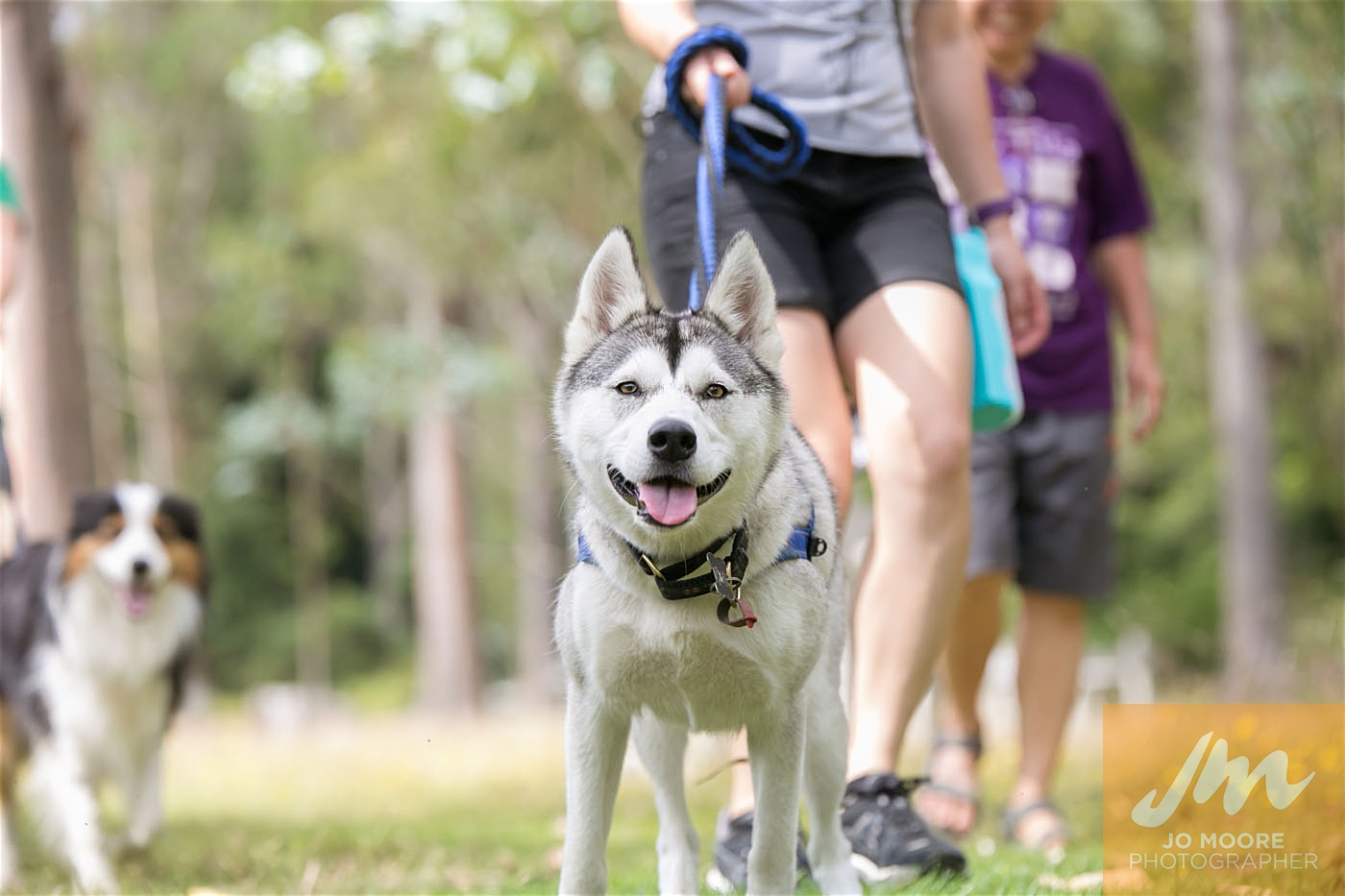 Paws in the Park-119.jpg