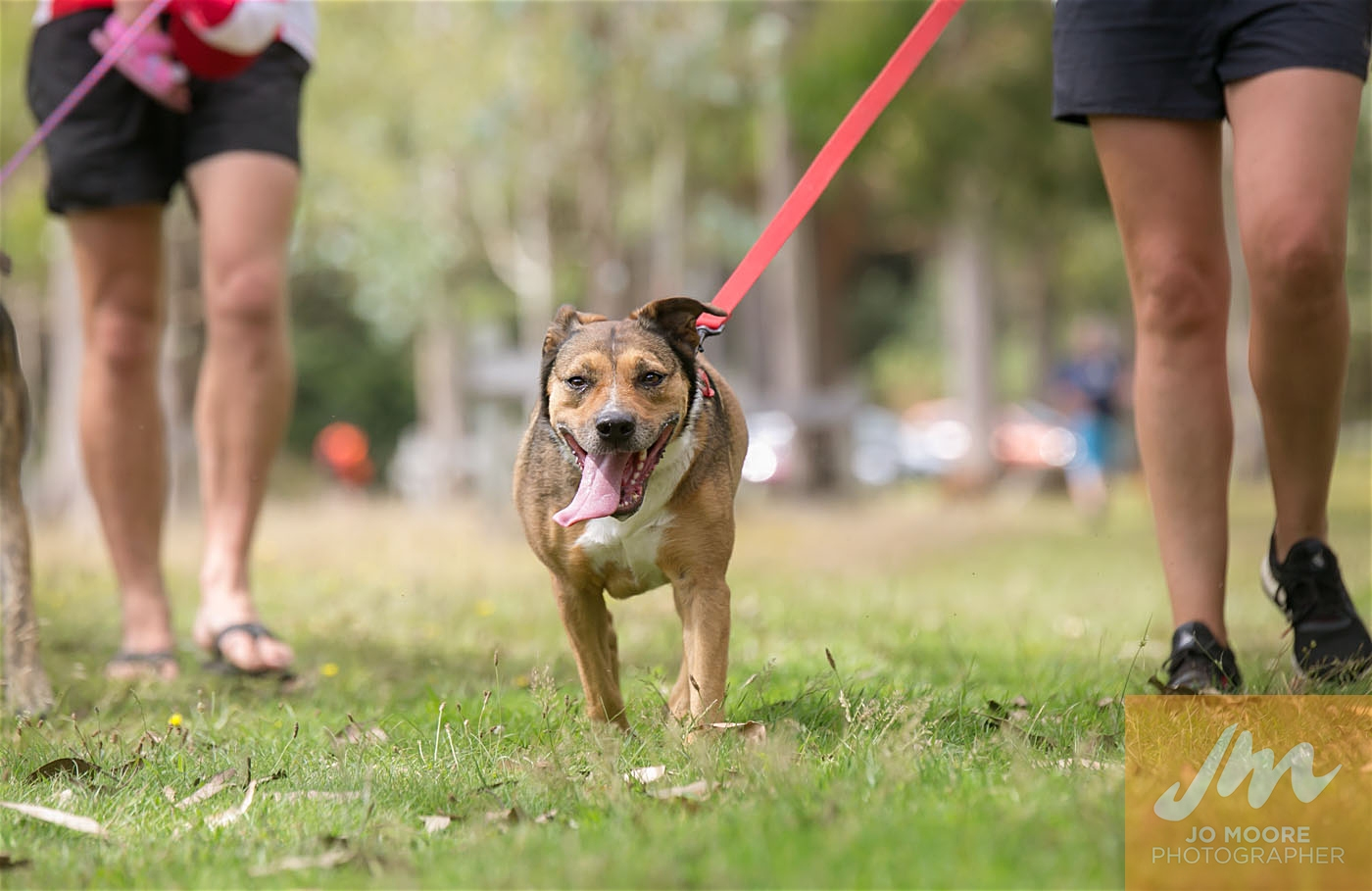 Paws in the Park-125.jpg