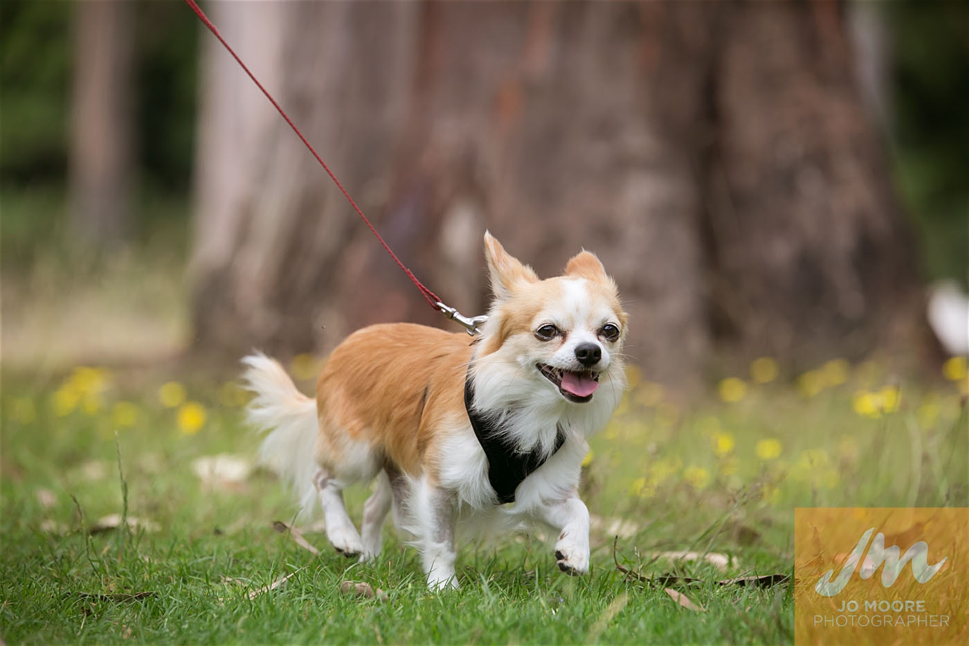 Paws in the Park-127.jpg