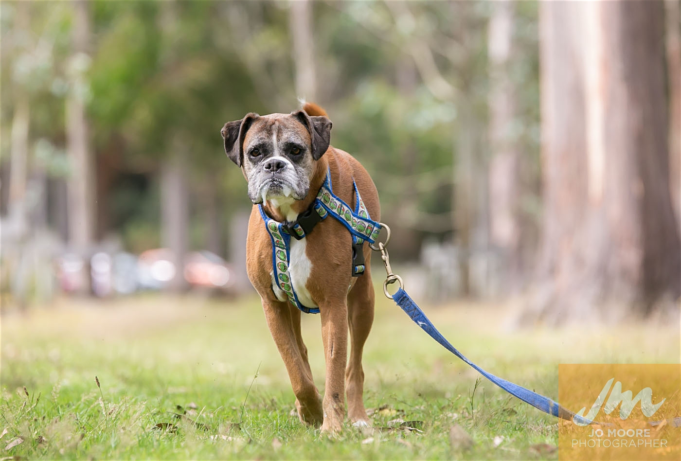 Paws in the Park-130.jpg