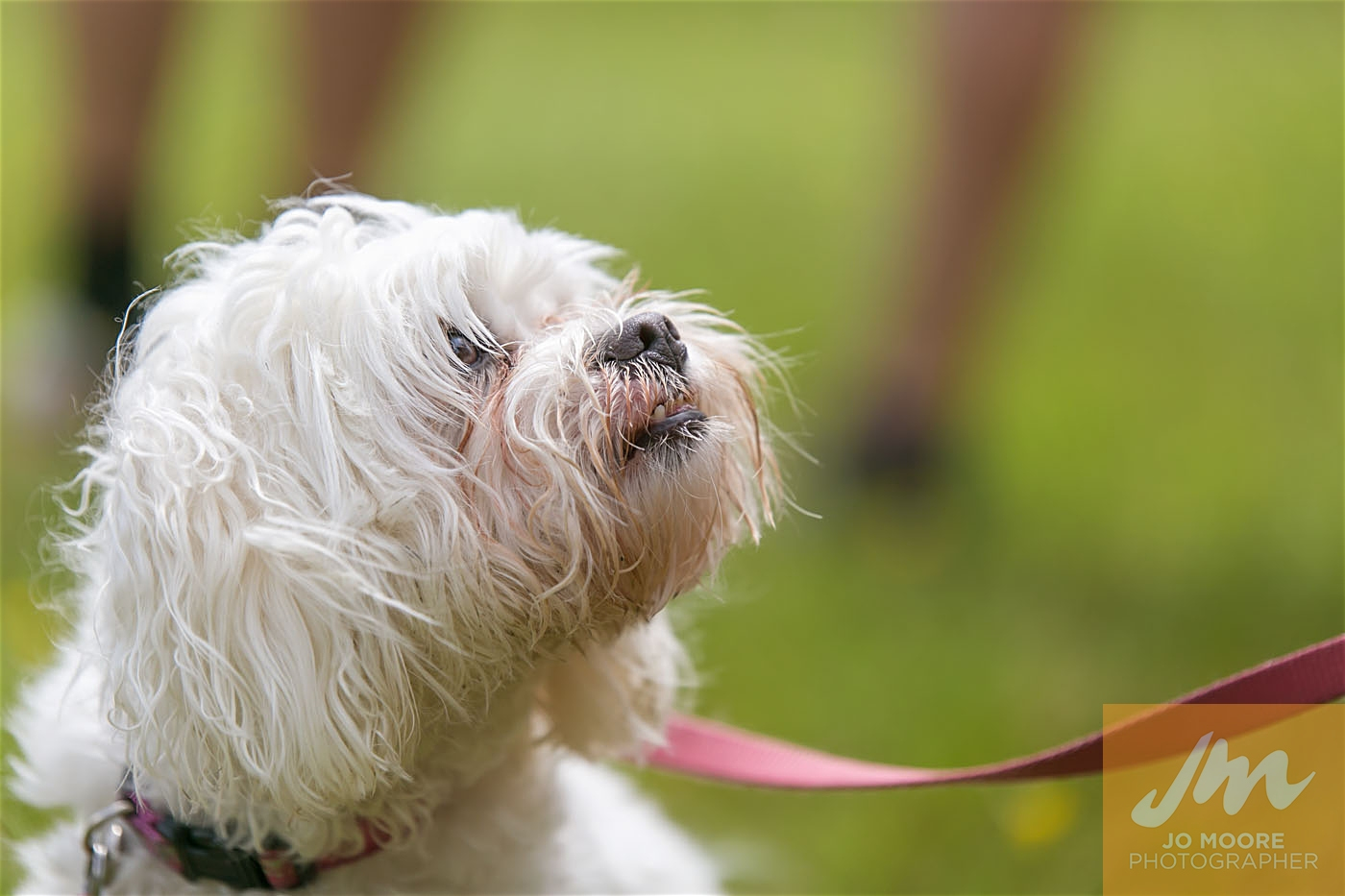 Paws in the Park-163.jpg