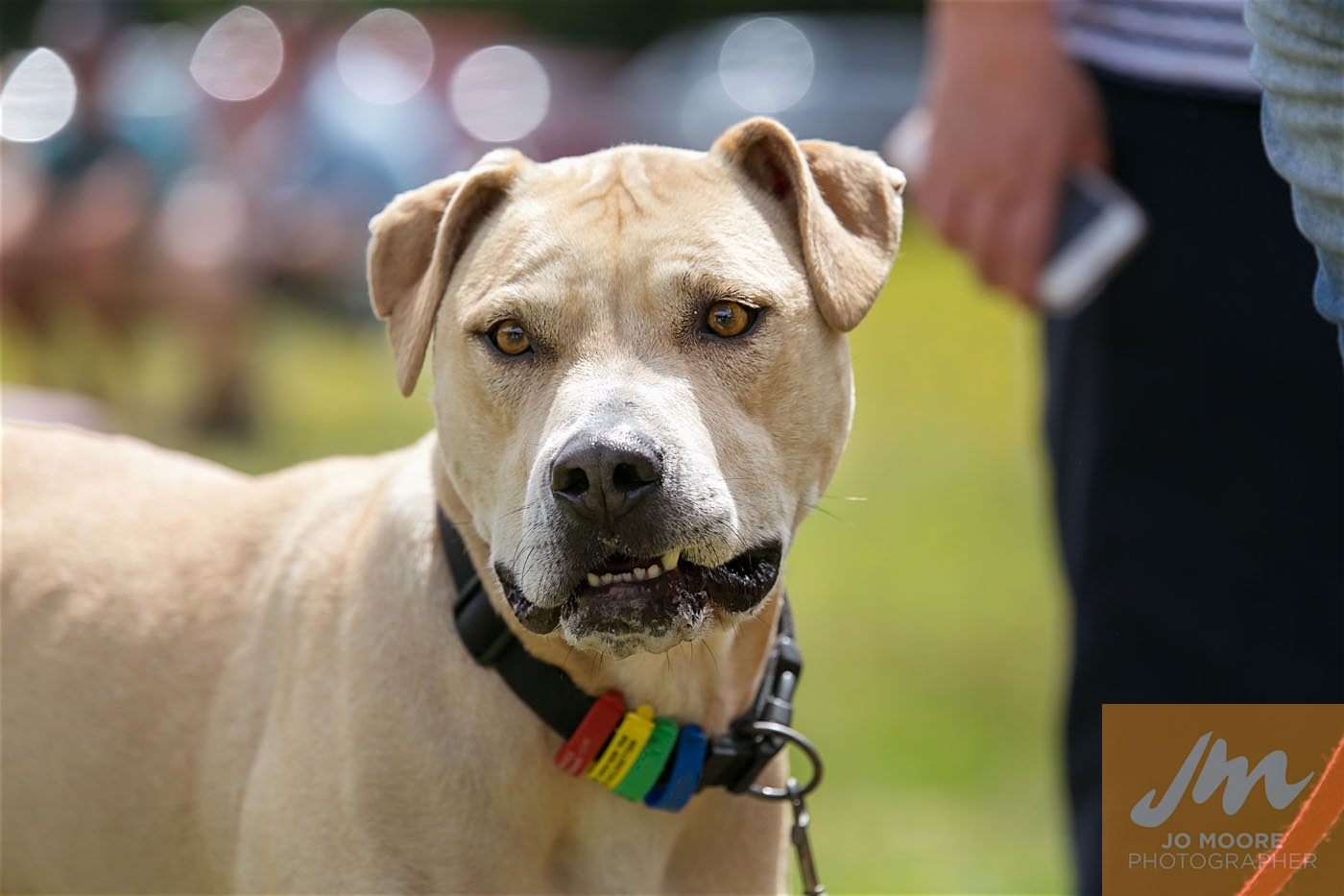 Paws in the Park-167.jpg
