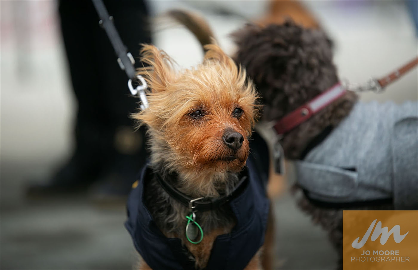 Pups in the Park-39.jpg