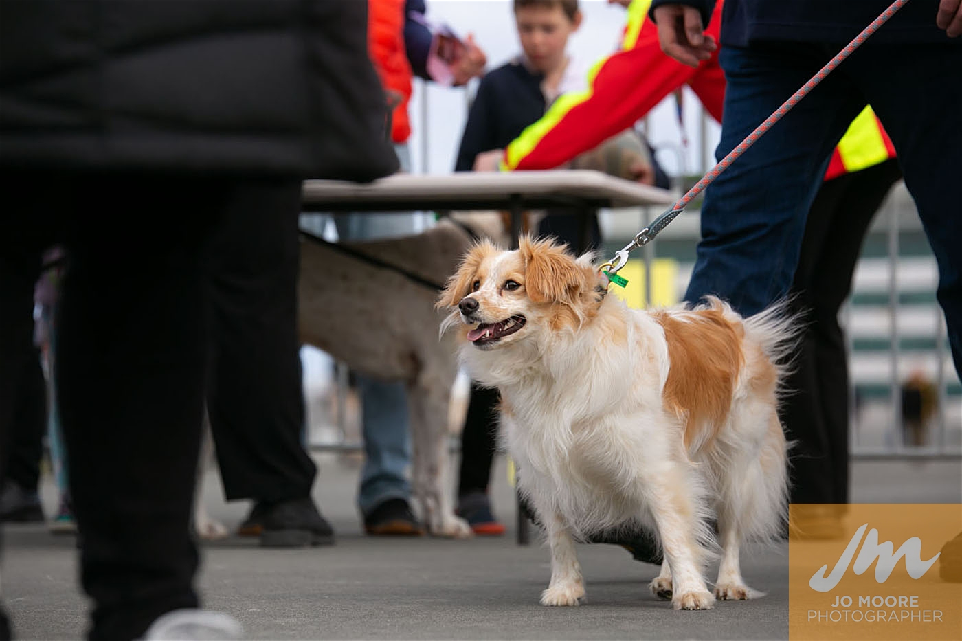 Pups in the Park-61.jpg
