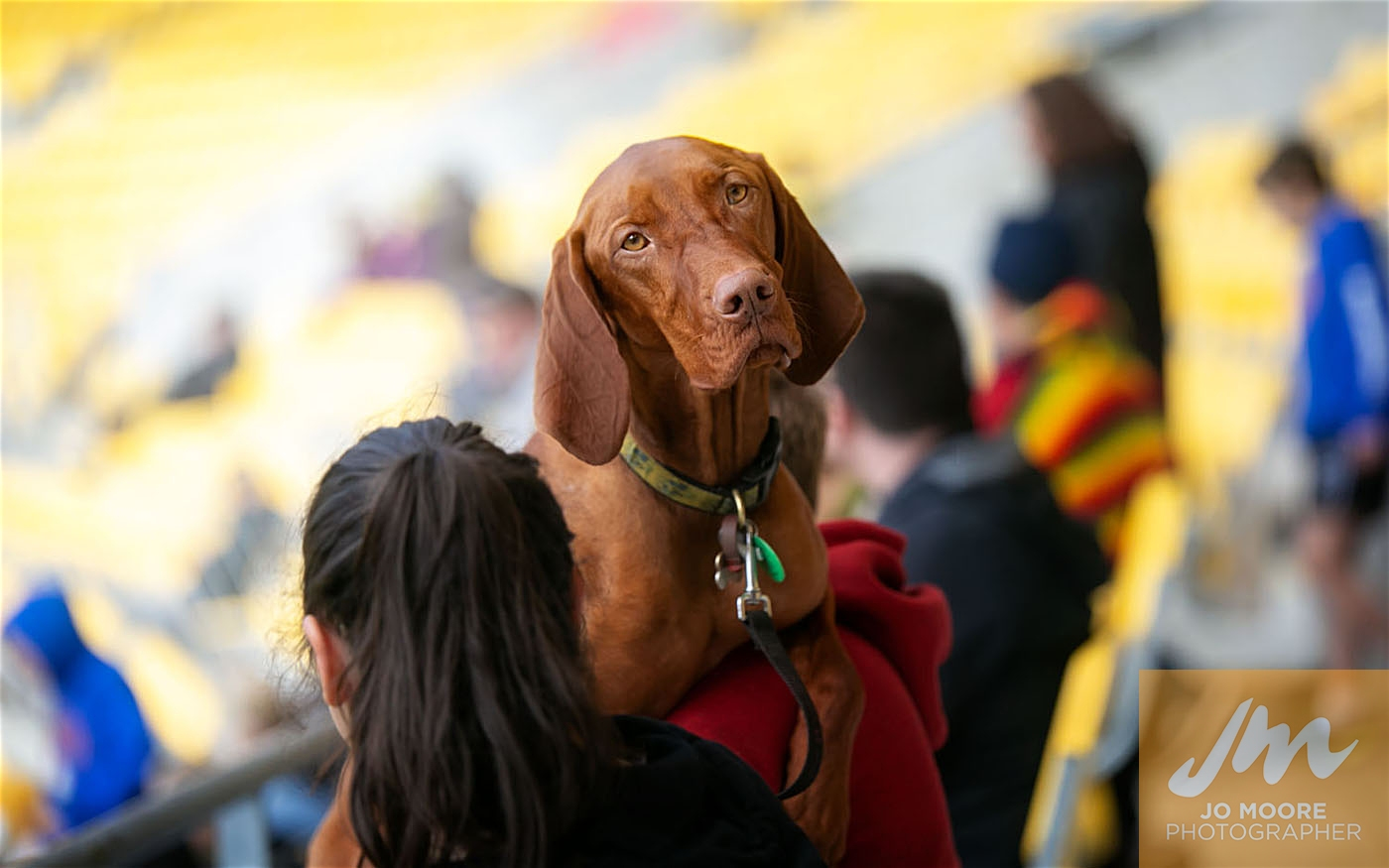 Pups in the Park-98.jpg