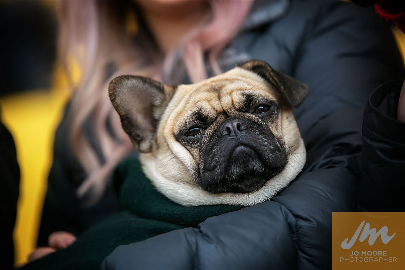 Pups in the Park-103.jpg