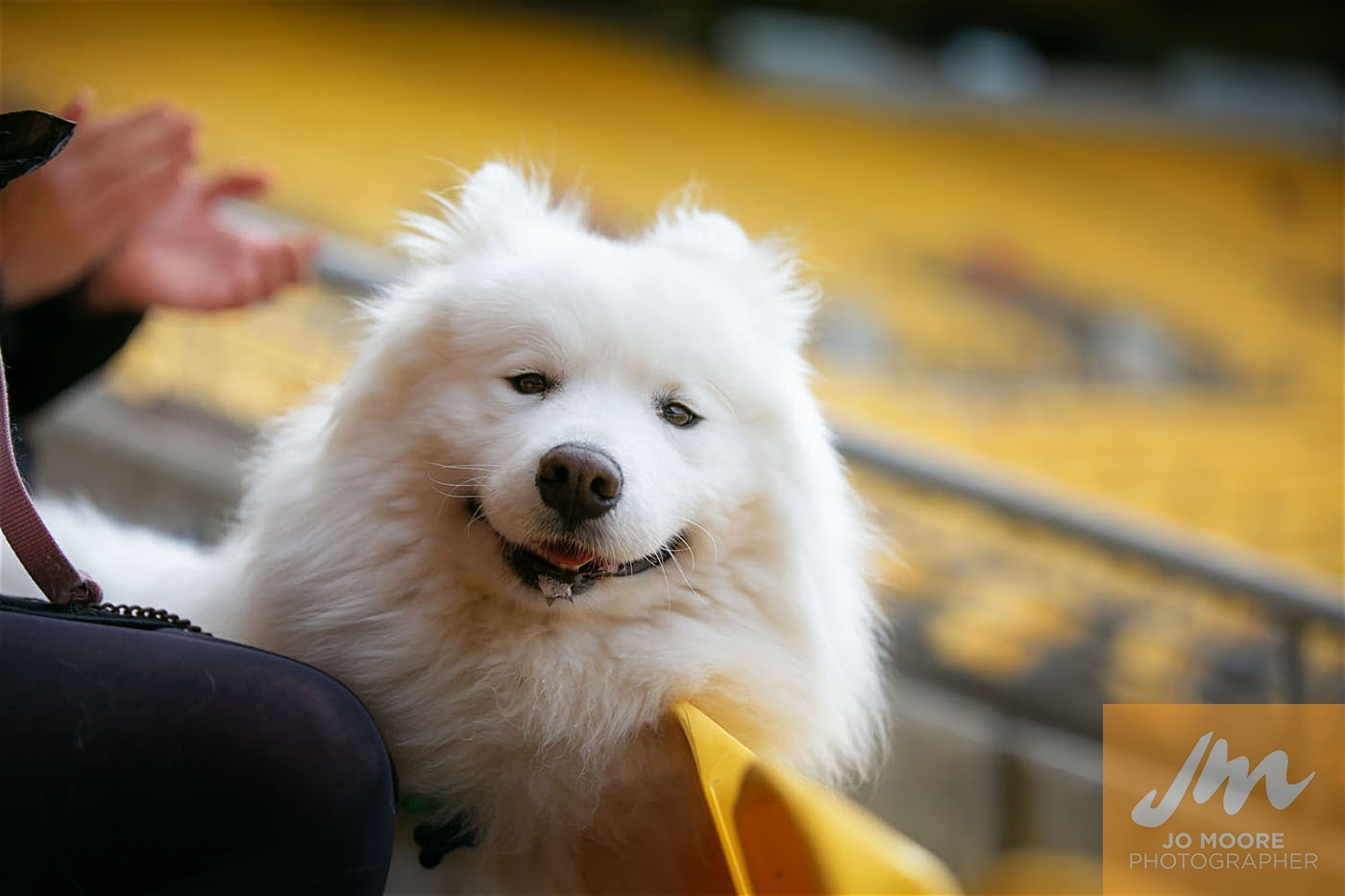 Pups in the Park-115.jpg