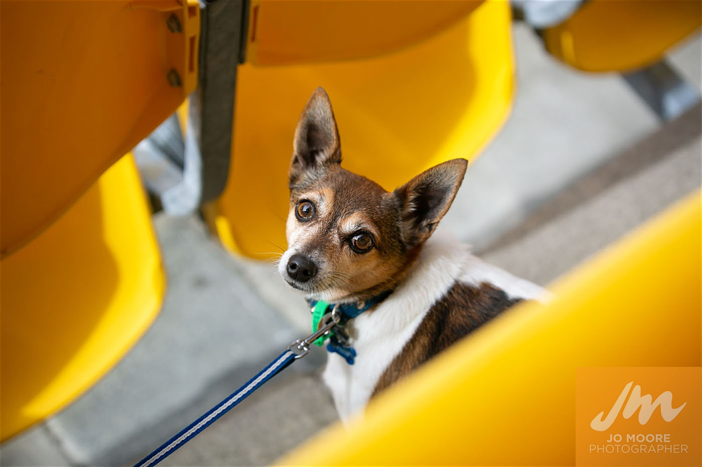 Pups in the Park-135.jpg