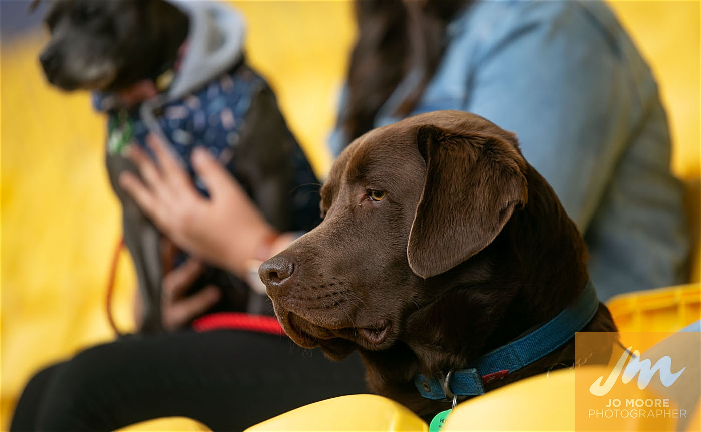 Pups in the Park-150.jpg