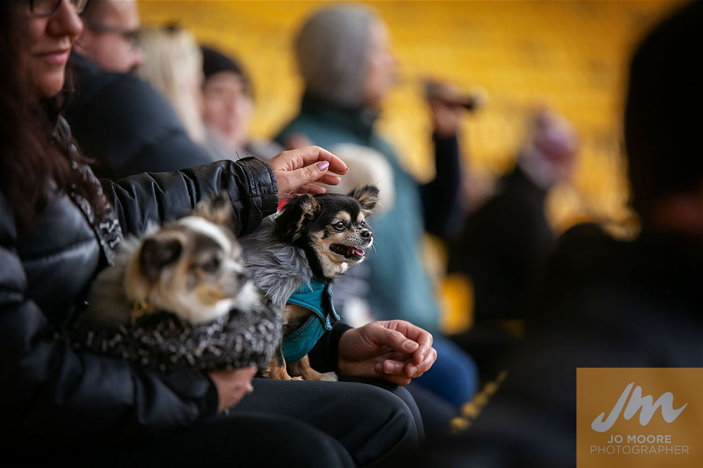 Pups in the Park-182.jpg