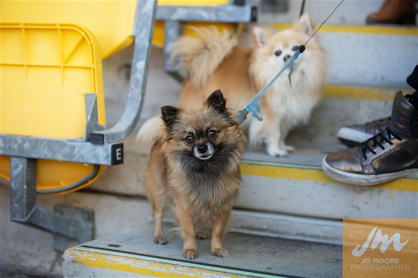 Pups in the Park-199.jpg