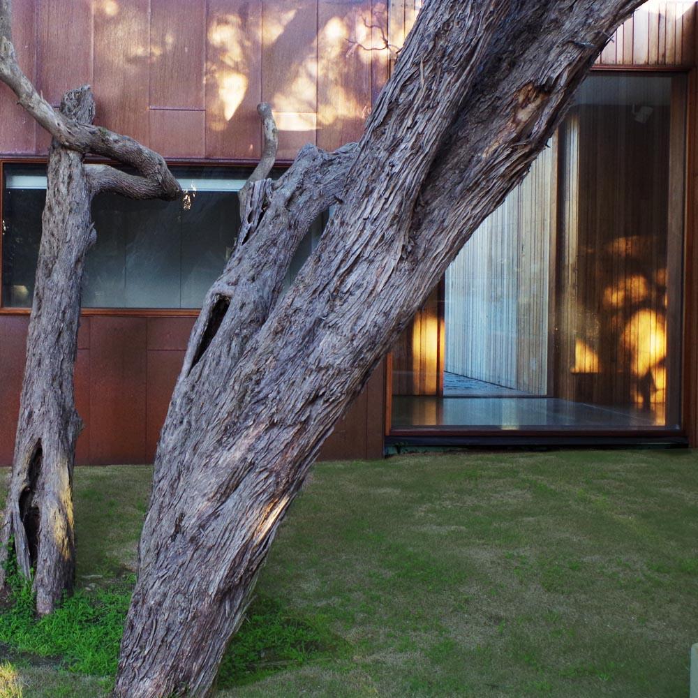 moonah courtyard 2.jpg