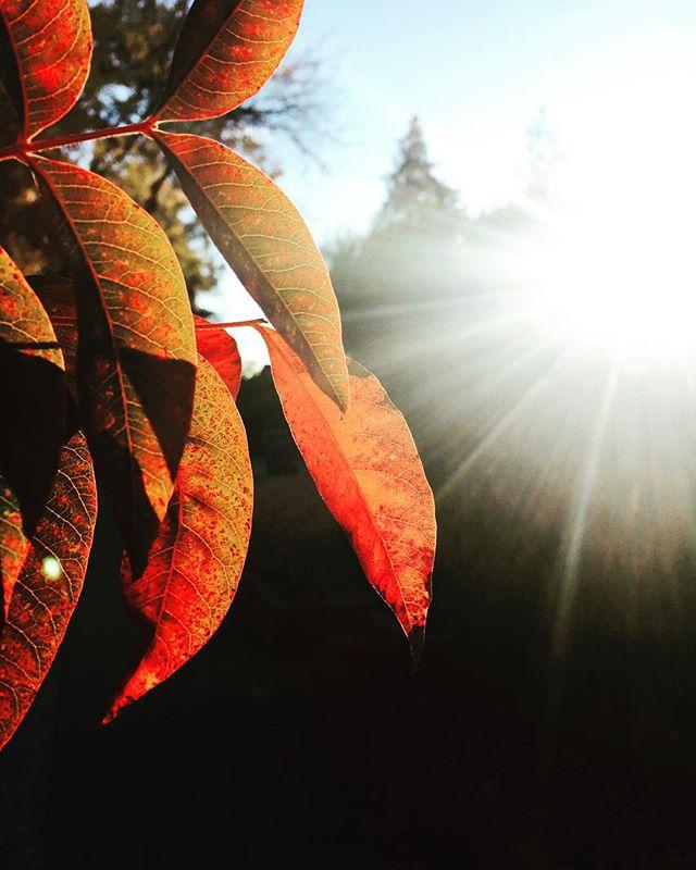 Morning light.  #California #californialiving #ShotOniPhone #iPhone #morning #peace #nature #outdoors #campbell #light #chasinglight #morninglight #morningcolors #colorsofthemorning