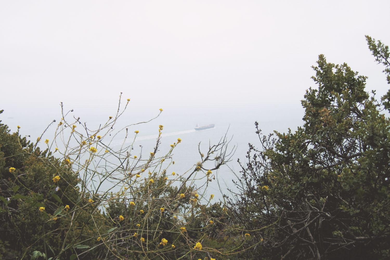 FP_CA_Pacific_Ocean10.jpg