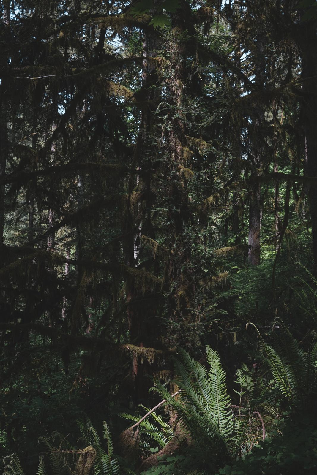 Oregon_Aroll_WEB_1600-37.jpg