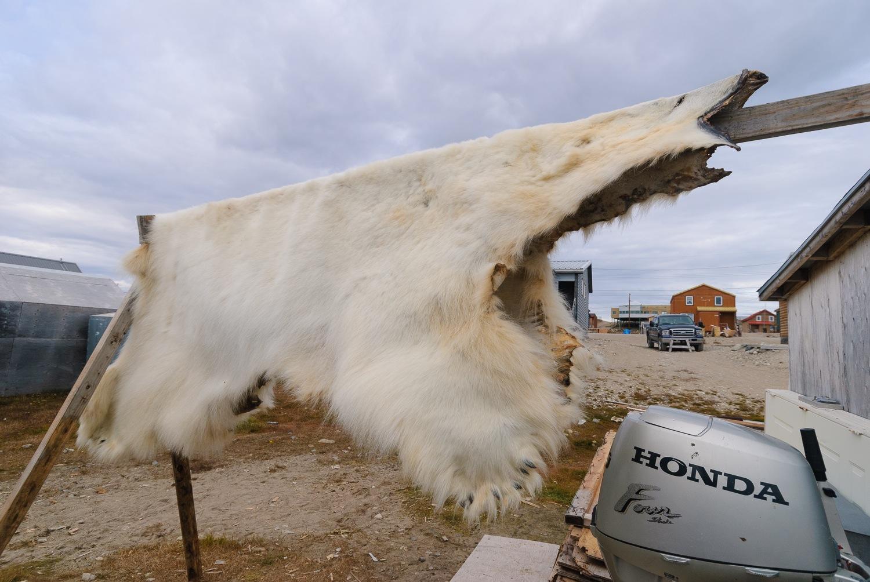 Polar Bear Hide
