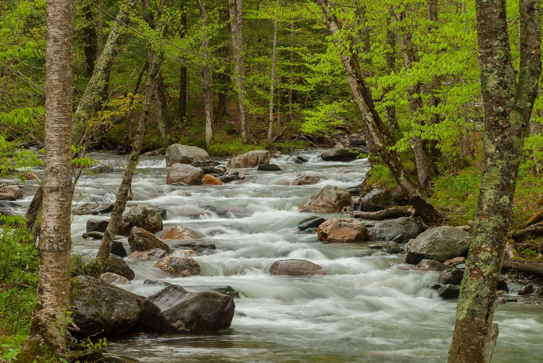 Mad River Springtime