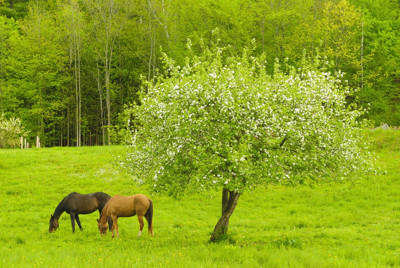 Springtime Horses