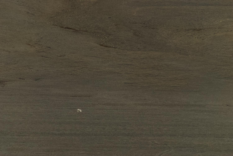 Stranded Polar Bear in the Polar Desert