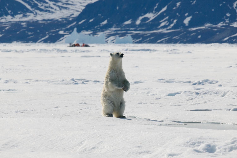 Polar Bear and Inuit Hunting Camp