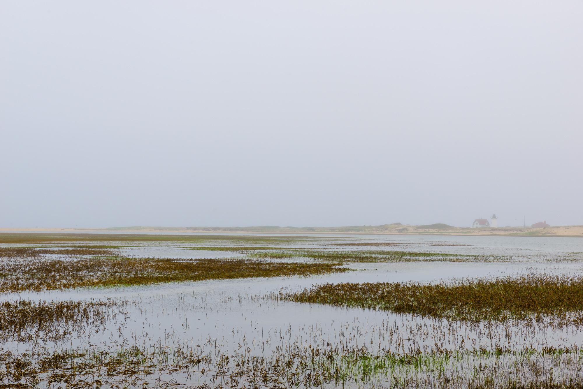 Cape Cod Spring