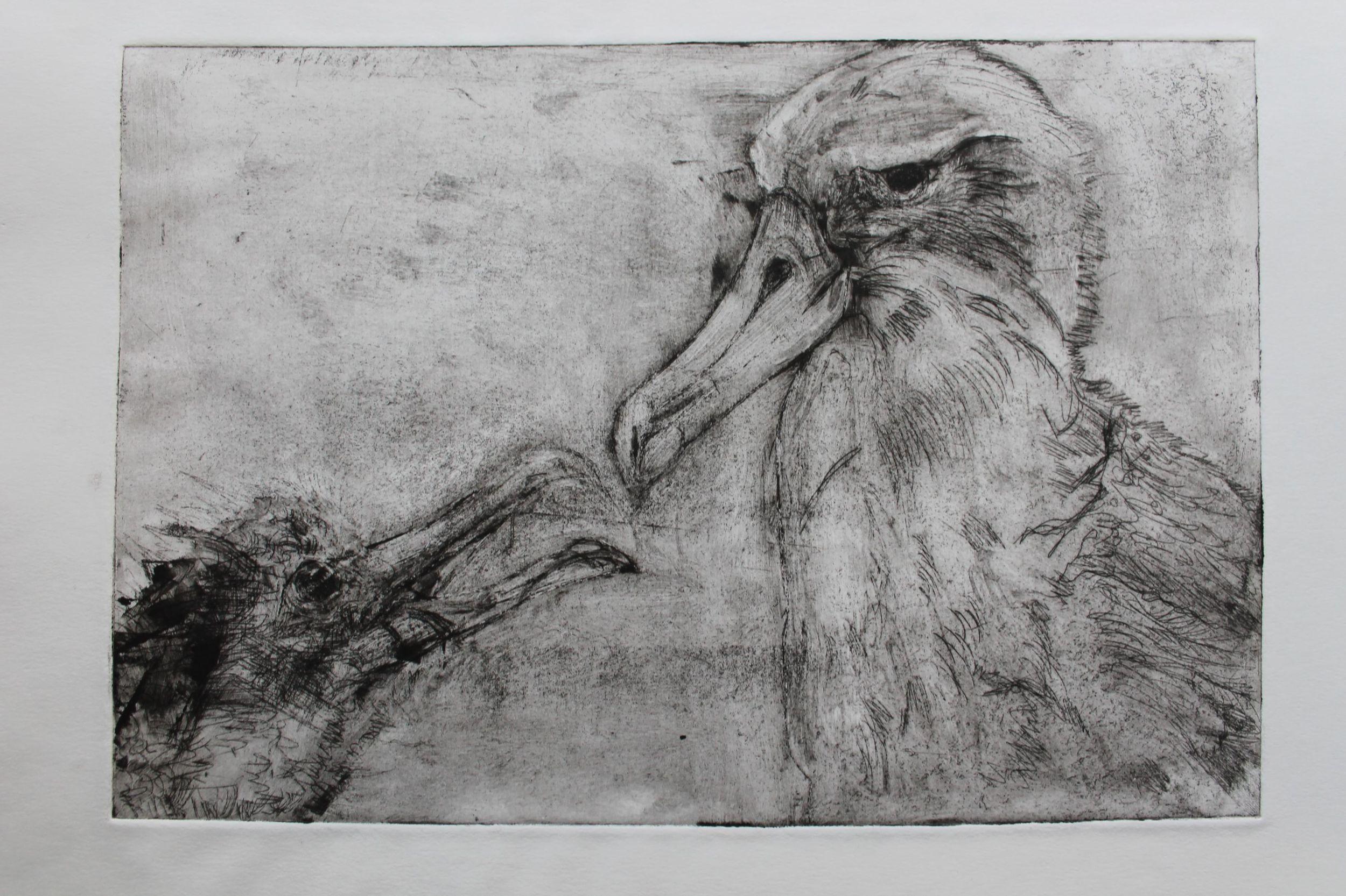 albatrossprint6.JPG