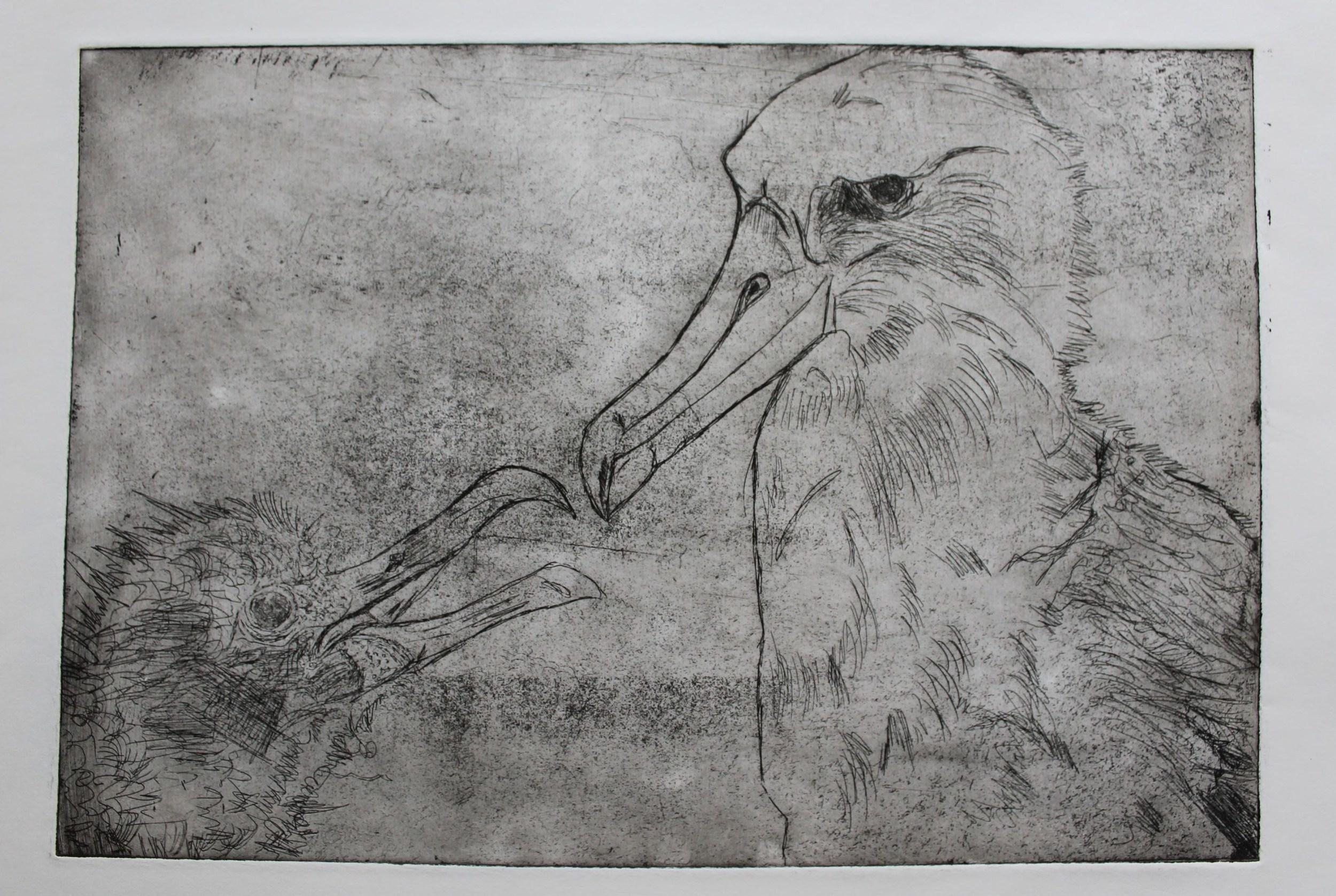 albatrossprint8.JPG