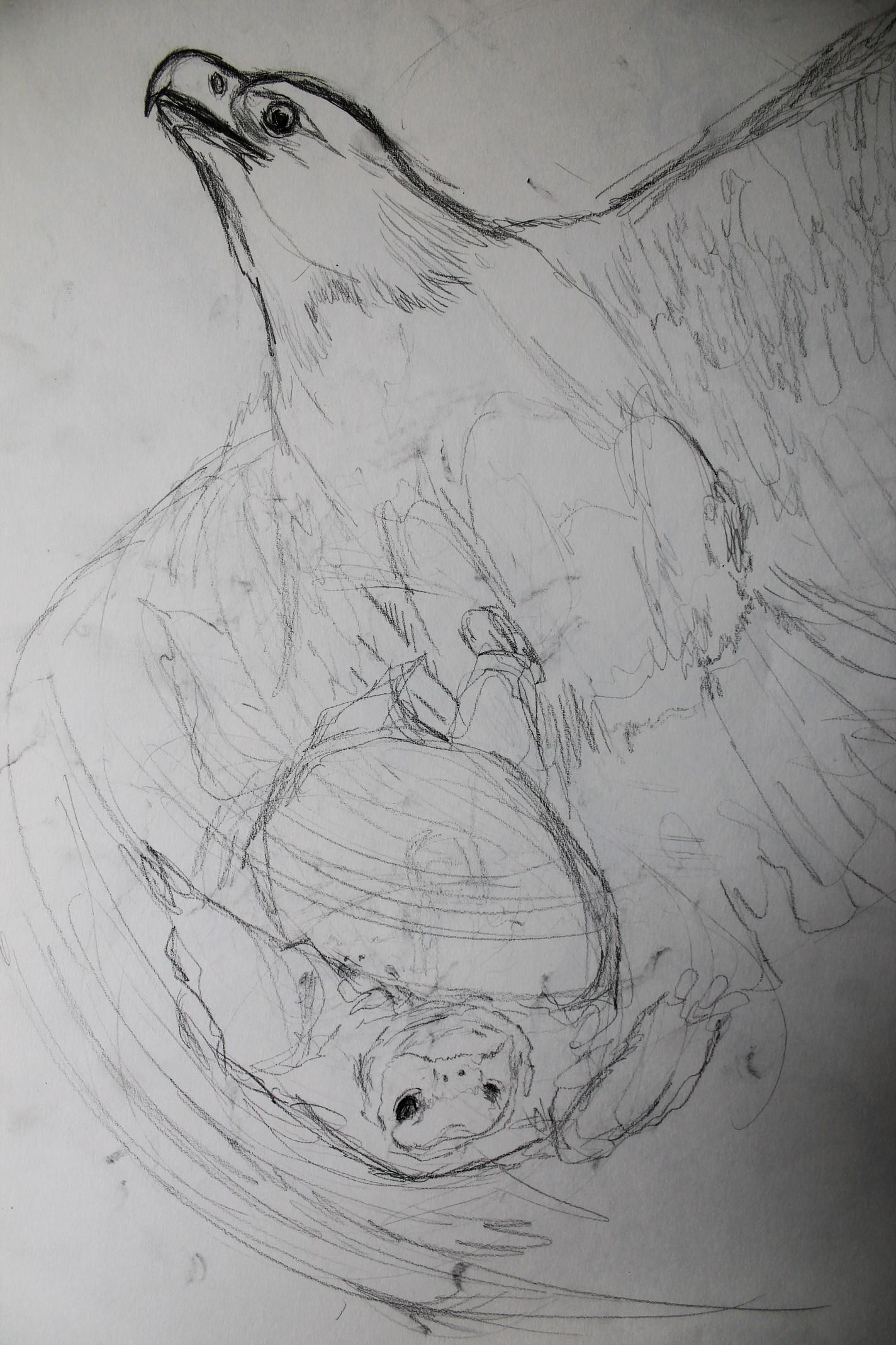 eagle-tortoise-sketch4.jpg.JPG