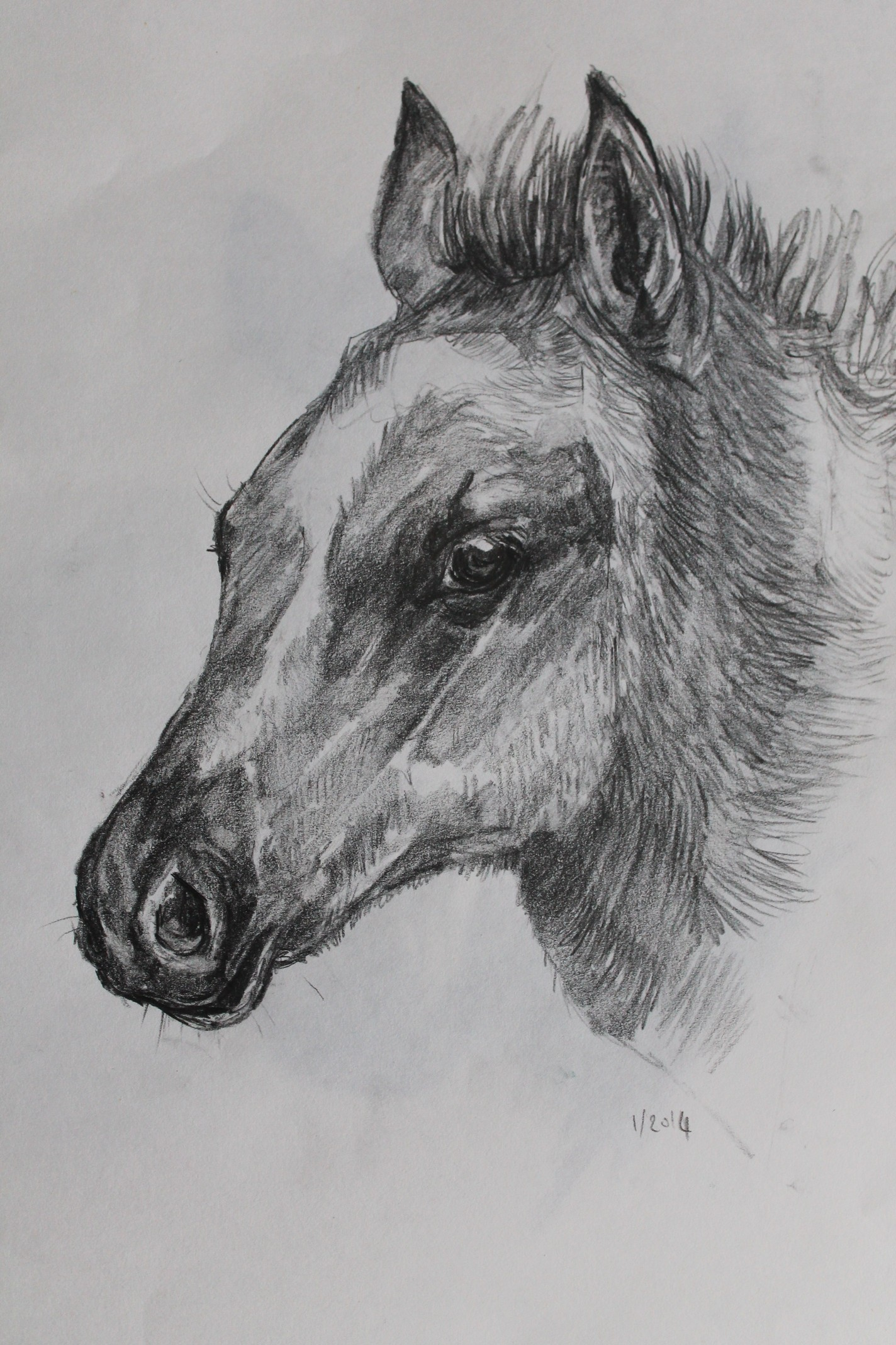 2014, 4B pencil drawing of a foal, under two hours to finish