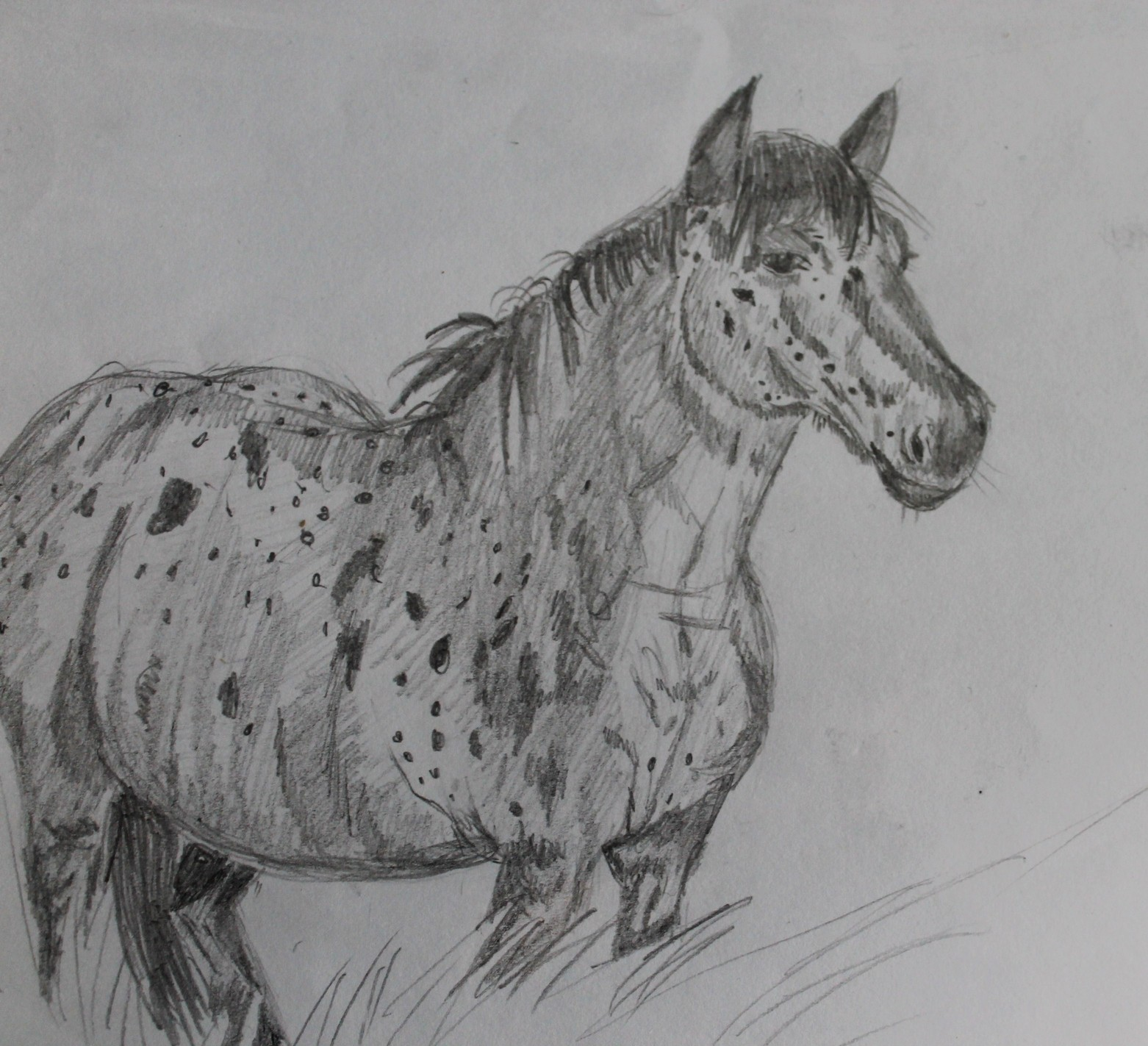 2010, 4B pencil drawing of a  horse