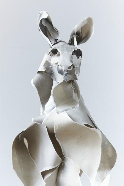 Roos  ©Anna-Wili Highfield  annawilihighfield.com
